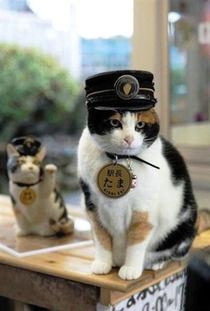 艹猫0补丁krkr2-日本和歌山电铁24日宣布,