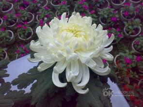 如何使鲜花的美丽绽放的更持久