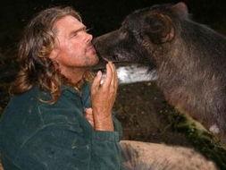 英国的野生动物专家艾利斯-学嚎叫吃生肉与狼共舞 英动物学家成为狼人