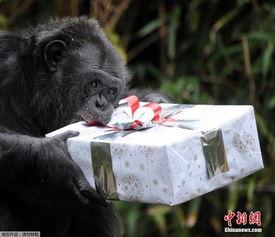 法国动物园为动物分发圣诞礼物