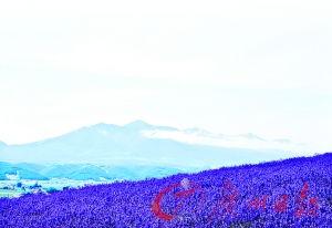 浓了,到处充满生机.自日本对中国公民开放自由行后,北海道是自由...