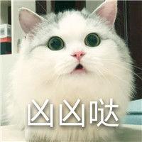 表情 超凶的猫咪QQ表情包 超凶的猫咪QQ表情包下载 表情
