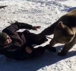 """壮熊玩肌肉男-我们从不给它肉吃,因为担心那样会让它有更强的攻击性.""""他说...."""