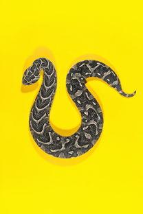 ...蛇灾》,在古代传说和现代流行文化里,蛇总是令人毛骨悚然.不...