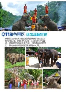 ...林探寻基诺族的秘密 森林公园孔雀放飞 曼听公园骑大象 品尝傣族孔...