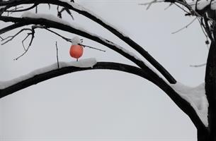雪的诗句-雪之诗