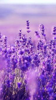 ...个性的图片无比的好看至极啊,如此简约的手机壁纸亲们喜欢么~-紫...