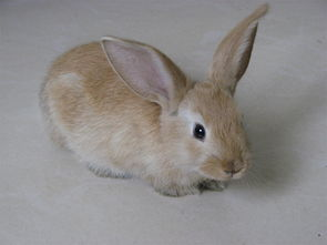 农村养什么兔子赚钱