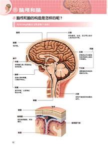 3D人体解剖图 从身体构造检索疾病