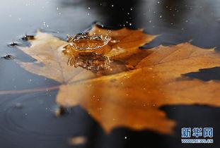 一叶落知天下秋.从枝头那一片落叶开始,秋天就这样走进了我们的视...