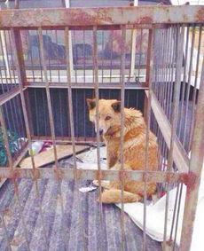 村上里沙 和2只狗番号-浙江杭州半山的狗狗收容所,城管送去一只母狗和一窝小狗,没想到,...