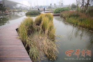 西安植物园新园区试开园一个月 植物 设施破坏花样多