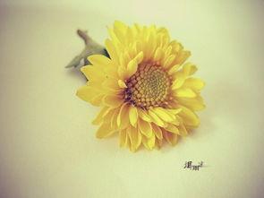 向日葵花语