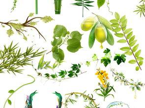 ...新春天生机绿色植物盆栽素材大全图片下载素材 树叶