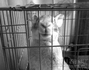...小说这是她养的兔子 (图片来源:四川在线)-虐兔女 身份被曝原是...