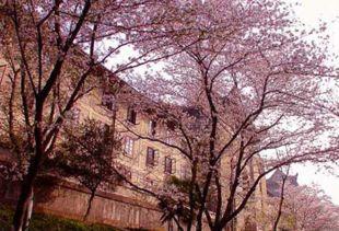 2018武汉大学樱花节是什么时候 最佳欣赏时间地点