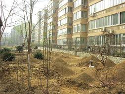 小区绿地埋藏大量建筑垃圾 业主向开发商索赔