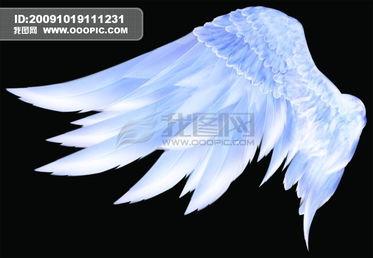 天使的翅膀模板下载 710912 我图网www.ooopic.com