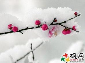描写雪景的句子有哪些?-盘点关于雪的经典唯美句子