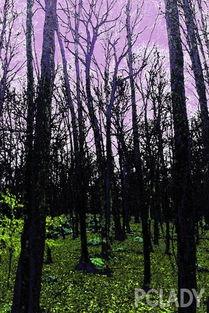 五月丁香啪啪综合激情r-五颜六色与神秘的森林.——Jeffrey Costello and Robert Tagliapietra, ...