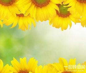 向日葵花语是什么,向日葵花语图片大全
