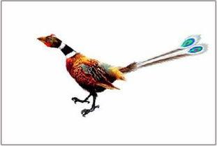 母鸡屁股上插2跟孔雀毛,哈哈.   中国专家制造的古代鸟,中国专家   ...