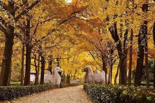 宁静怡然.又到了落叶的季节,就会想起一个人.   植物园本就是植物...