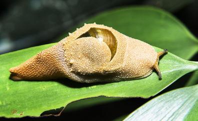 花上长小白飞虫是撒虫-花虫语 一