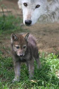 人与动物的不了情 世界兽孩大揭秘