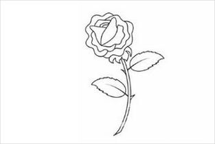一支美丽的玫瑰花 简笔画
