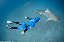 威廉姆-温拉姆和皮埃尔-弗洛拉仅穿游泳衣在南非海岸附近与虎鲨共舞-...