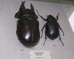 花上长小白飞虫是撒虫-...上现存最大十类昆虫