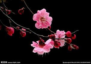 花卉动态视频