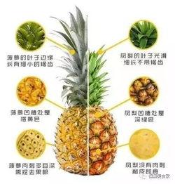 凤梨和菠萝的区别 凤梨和菠萝哪个好吃