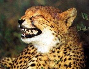 非常豹笑是什么意思 非常豹笑是什么梗出处