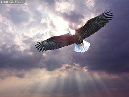 水彩画飞翔的老鹰的画法