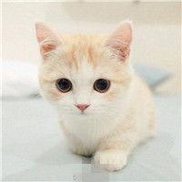 表情 qq可爱头像可爱小奶猫头像大全 萌翻天的小猫咪 表情