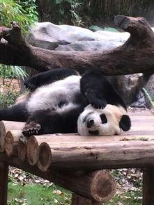 广州长隆野生动物世界 平日 成人票长隆野生动物园 头天在驴妈 驴妈妈...