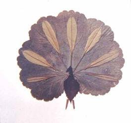 教幼儿用树叶制作粘贴画——公鸡