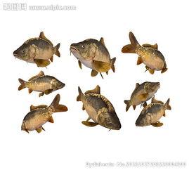 鱼动态抠图图片