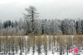 彩后,悄然而至的雪花让秋天的脚... 几场大雪接踵而至.冬天来了,满...