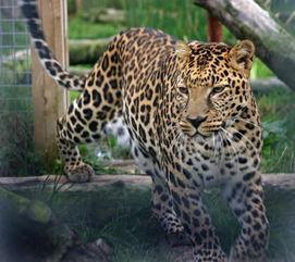 ...被送给动物园.(图片来源:Animalarium Borth Zoo)-英夫妇买下动...