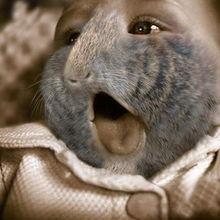 英国试验人类和动物杂交胚胎