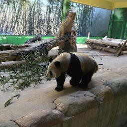 杭州野生动物世界 成人票 刷身份证或二维码入园 杭州野生动物世界 ...
