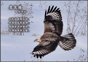 描写鸟的诗句古诗-一诗一画 百鸟篇  一诗一画 · 百鸟篇!