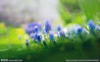 蓝色妖姬——丝网花蓝色妖姬的做法