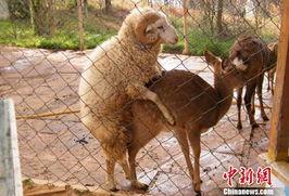 用ps制作暖羊羊图片来熟悉钢笔工具