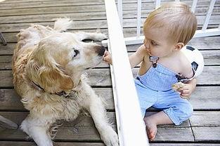 宠物身上的细菌和寄生虫容易引起过敏-宝宝皮肤过敏四大环境因素