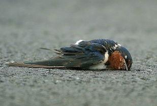 ...只鸟与另一只鸟催人泪下的故事