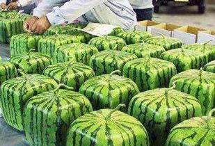 丰满肥熟农村老鸡-乡下农民有意种出人形西瓜,年收入百万